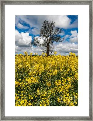 Sea Of Yellow Framed Print by Adrian Evans