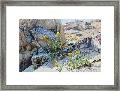 Sea Rock Posies Framed Print by Karol Wyckoff