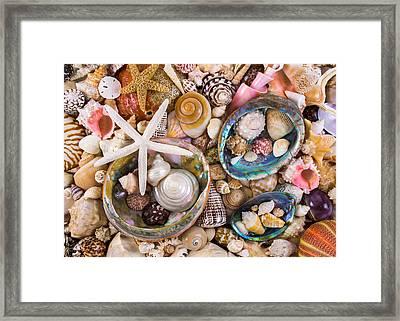 Sea Shells Framed Print by Jim Hughes