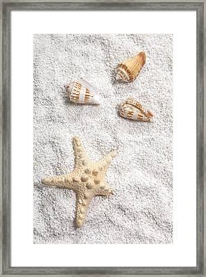 Sea Shells Framed Print by Joana Kruse