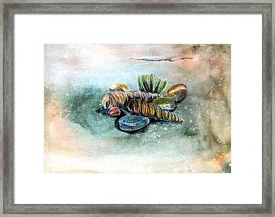 Sea Shells Framed Print by Mindy Newman