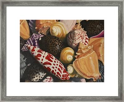 Sea Shells Framed Print by Sid Ball