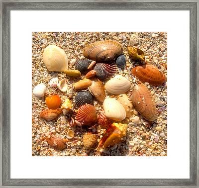 Sea Shells Work D Framed Print by David Lee Thompson
