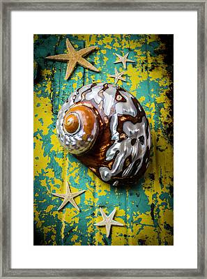 Sea Snail Shell With Stars Framed Print by Garry Gay