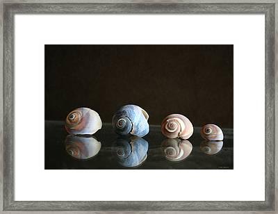 Sea Snails Framed Print by Linda Sannuti
