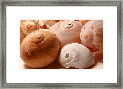 Sea Spirals Framed Print by Barbara  White