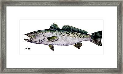 Sea Trout Framed Print by Kevin Brant