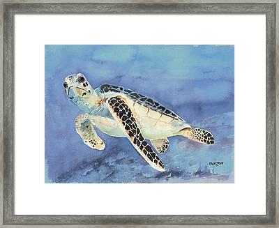 Sea Turtle Framed Print by Arline Wagner