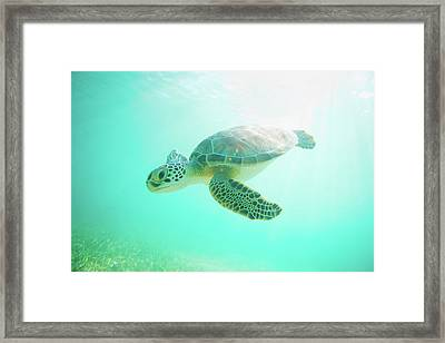 Sea Turtle Baby Framed Print by Monica and Michael Sweet