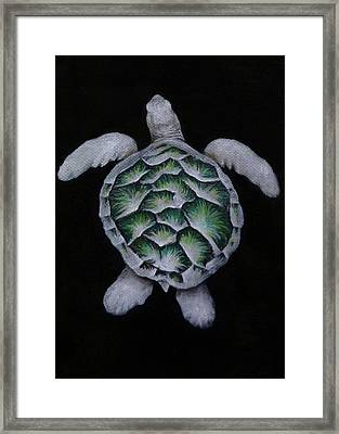 Sea Turtle Left Framed Print by Michelle Iglesias