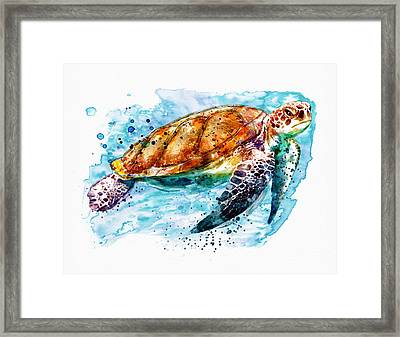 Sea Turtle  Framed Print by Marian Voicu