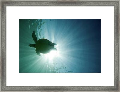Sea Turtle Framed Print by M.M. Sweet