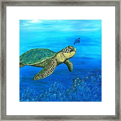 Sea Turtle Framed Print by Sabrina Zbasnik