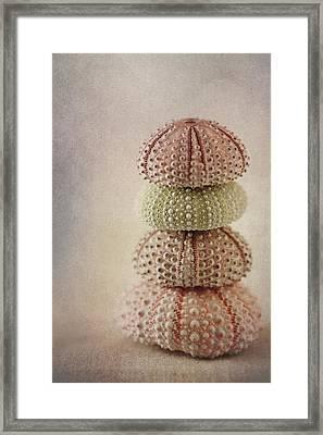 Sea Urchins Framed Print by Carol Leigh
