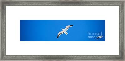 Seagull Blue Framed Print by Cesar Marino