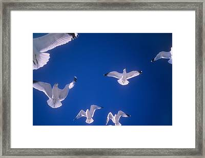 Seagull Float Framed Print by Gerard Fritz