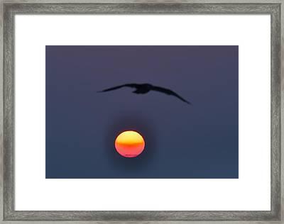 Seagull Sun Framed Print by Bill Cannon