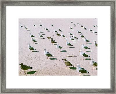 Seagulls  Framed Print by Ariane Moshayedi
