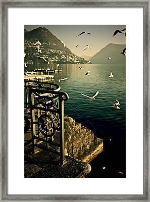 Seagulls Framed Print by Joana Kruse