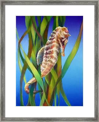 Seahorse I Among The Reeds Framed Print by Nancy Tilles