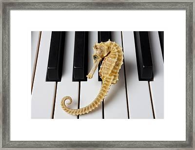 Seahorse On Keys Framed Print by Garry Gay