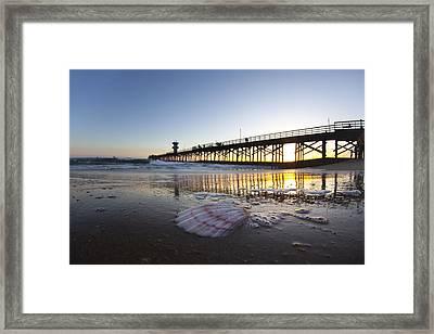 Seal Beach Shell Framed Print by Sean Davey