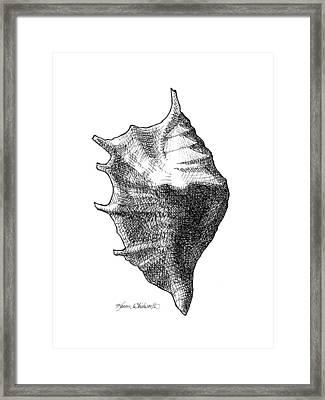 Seashell 1 - Nautical Beach Drawing Framed Print by Karen Whitworth