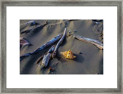 Seashell And Driftwood Framed Print by Garry Gay