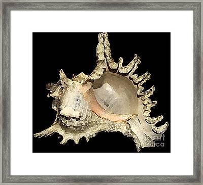 Seashell Framed Print by Emrazina Prithwa