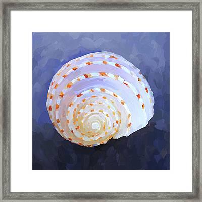 Seashell Iv Framed Print by Jai Johnson