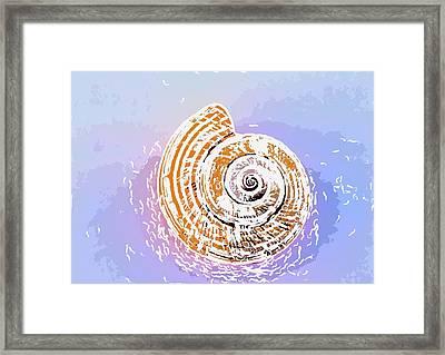 Seashell  Framed Print by Lanjee Chee