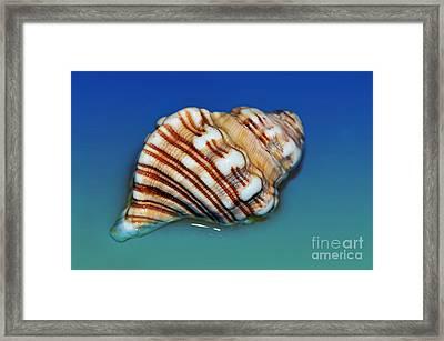 Seashell Wall Art 1 Framed Print by Kaye Menner