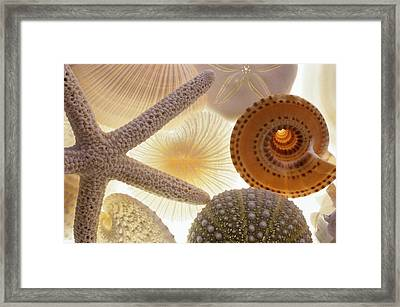 Seashells And Starfish Framed Print by Barbara Chase