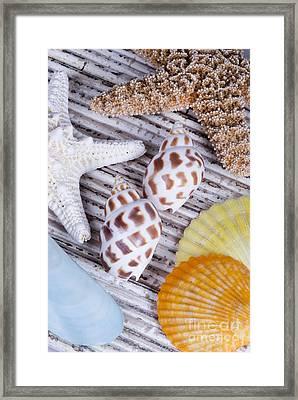 Seashells And Starfish Framed Print by Bill Brennan - Printscapes