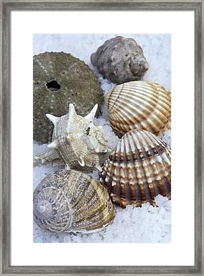 Seashells Framed Print by Frank Tschakert