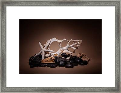 Seashells On The Rocks Framed Print by Tom Mc Nemar