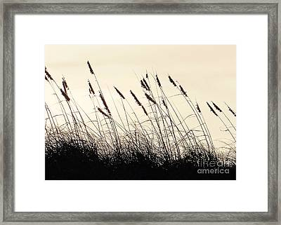 Seaside Oats Framed Print by Joy Hardee
