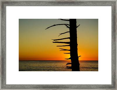 Seaside Tree Branch Sunset 2 Framed Print by Pelo Blanco Photo