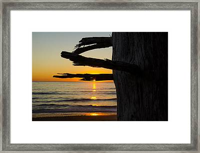 Seaside Tree Branch Sunset Framed Print by Pelo Blanco Photo