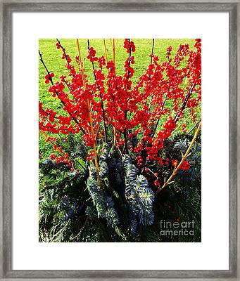Seasons Greetings Framed Print by Xueling Zou