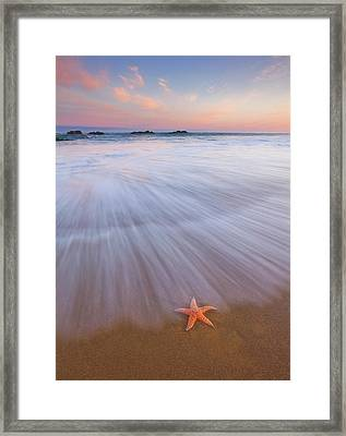 Seastar Sunrise Framed Print by Darren White