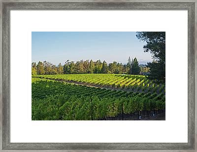 Sebastopol Elphick Street Vineyard Sebastopol Ca Framed Print by Toby McGuire