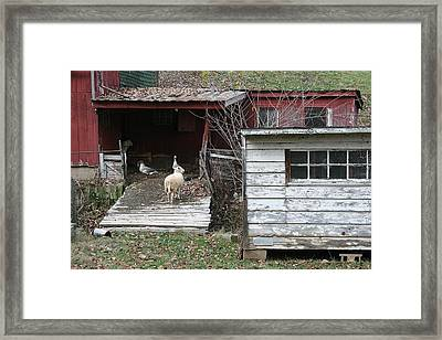 Secure Framed Print by William Albanese Sr