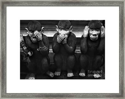 See No Evil, Hear No Evil, Speak No Evil Framed Print by Daniela White