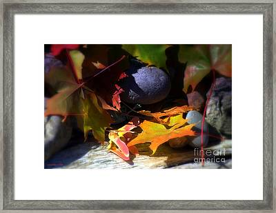 Seed Framed Print by Larry Keahey