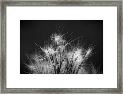 Seeds Of Life Framed Print by Marvin Spates