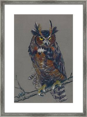 Seeking Owl  Framed Print by Christine Camp