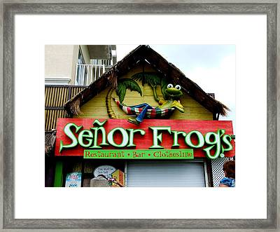 Senor Frogs Framed Print by Michiale Schneider