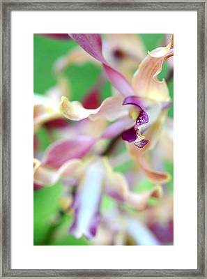 Sensual Touch Of Exotic II. Orchid II Framed Print by Jenny Rainbow