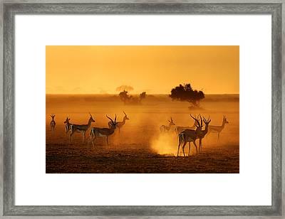 Sentinels Framed Print by Mathilde Guillemot
